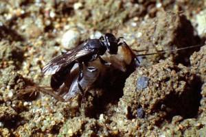 Larridae gen. sp.